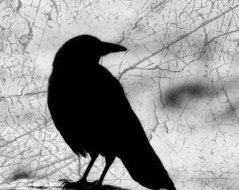 Digital Download Crow Silhouette Photo, Dark Art, Gothic Halloween Decor, Cemetery Photography