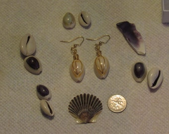 From the cowrie shell collection