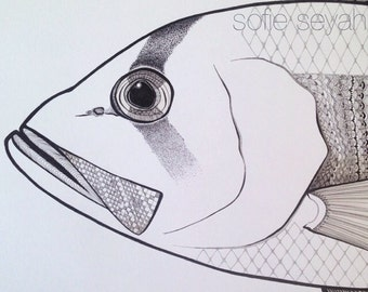 Black and White Dhufish Zentangle Nautical Fish Illustration - A3 Art Print - SALE