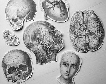 Handmade Anatomy Stickers - Pack of 7