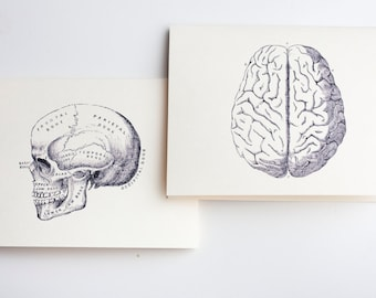 Brain and Skull Vintage Anatomy Note Cards