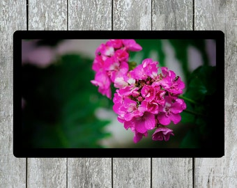 Flower Photo, Pink Flower, Hydrangea Photo, Plants Photo, Nature Photo, Spring Flower, Printable Wall Decor, Living Room Decor