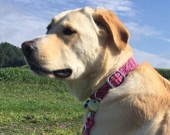 Buckle Dog Collar