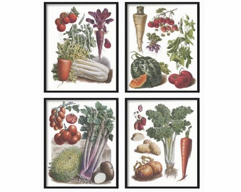 Botanical Vegetable Print Set of 4 -  Botanical Illustration - Kitchen Wall Art - Kitchen Print Set - Vintage Prints Art - Vintage Prints