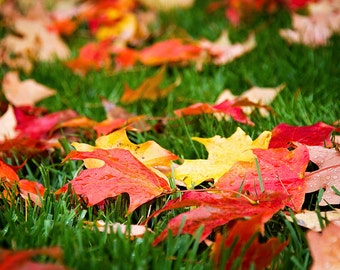 Photograph of Fall Leaves on Green Grass