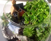 """Florarium """"Home Sweet Home"""""""