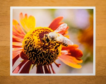 Honey Bee Sipping Nectar from a Red and Yellow Flower