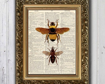 BEE BUMBLE BEE Nature Plate -- Dictionary Print  3006