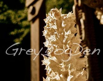 Dead Floweret With Lock Fine Art Photo
