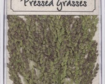 Pressed Broom Grass 18 pieces