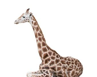 1 Giraffe Sitting Overlay