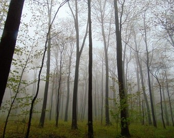 Fog photo, fog in woods photo- nature photography