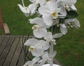 Orchid special occasion arangment