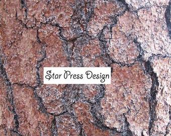 Tree Bark Image-Nature Background-Nature Digital Download-Unique Tree Bark-Nature Stock Image-Colorado Trees