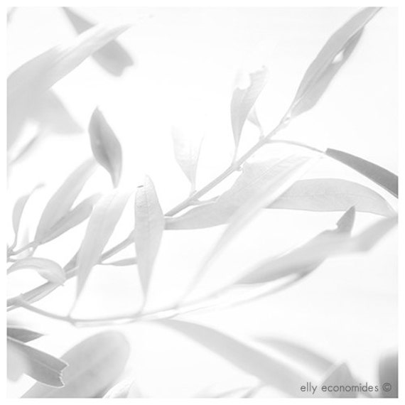 leafs, white, light, fine art photography, nature photography, black and white, Olive tree, 012. 'Olive Tree 2'