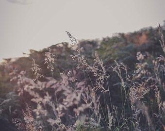 Autumn Field #1
