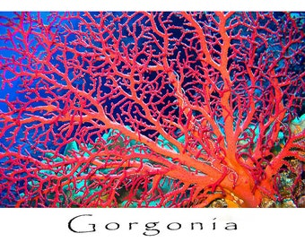 Greeting card, underwater image of sea fan, Christmas Island. Blank inside, logo and title on back.