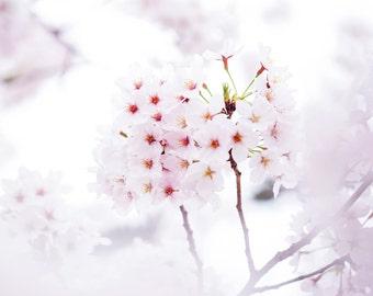 "Photography ""Sakura"" Format A4 20x30cms - Kyoto, Japan"