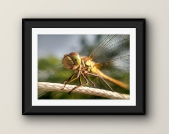 Digital Photo - Dragonfly - High Resolution - Macro - Instant Download - Photography - Digital Macro Photography