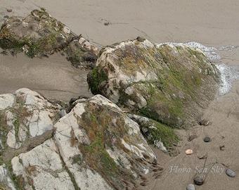 Rock Algae Beach Photo (2), Beach Photo 5x7 ,8x10, 11x14 Photo,Fine Art Photo,Neutral Colors Photo, Beach Still Life, California Beach Photo