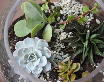 Fish Bowl Succulent Arrangement