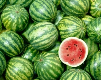 Watermelon 4oz Soy Candle