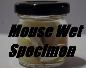 Baby Mouse Wet Specimen