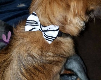 Dog bowtie