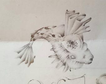 Skull/ Fish doodle