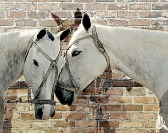 11 x 14 Print - White Mares brick backdrop