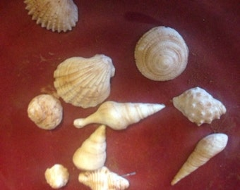 Custom candy seashells, candy, cupcake or cake toppers
