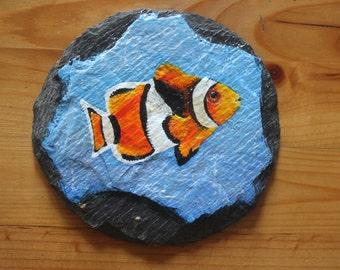 Clownfish on slate.