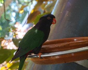 Colourful Bird