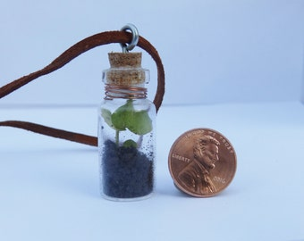 Glass Bottle Terrarium Choker