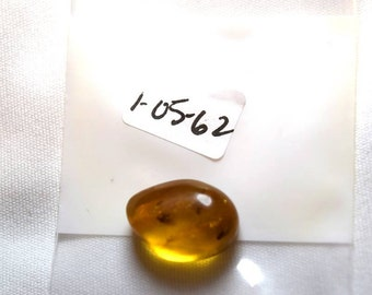 Dominic Amber .62 In 1 gram with Insect