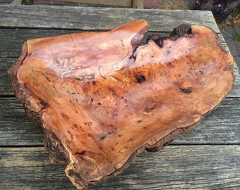Tasmanian Red Myrtle burl. Decorative or practical timber home decor.