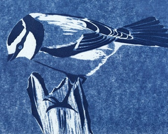 Original Cyanotype print Inquisitive Blue Tit bird print