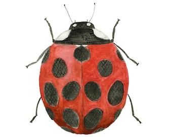 Ladybug Art, Insect Art, Bug Art, Entomology Art, Gardening Gift, Print, Ladybug Painting, Children's Art, Farmhouse Art, Girls Wall decor