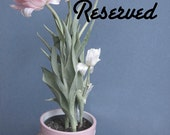reserved for Robert