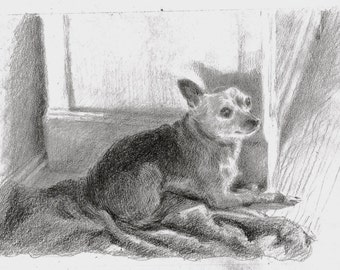 "Pet portrait, in pencil on paper, 8 x 10"", made to order"
