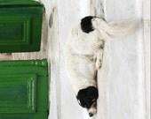 Dog photograph - Greece photography - white green decor - animal photography print - dark green door - dog art print - minimal photograph