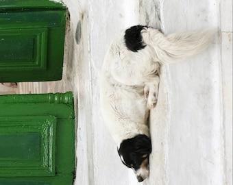 Dog photograph Greece photography white green decor animal photography print - Dog and Green Door