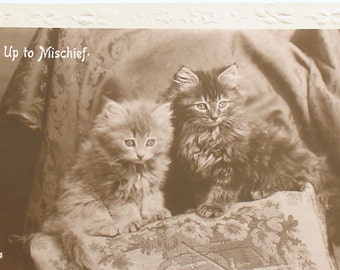 Antique Post Card Kittens Post Card