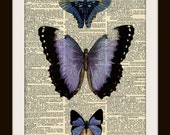 Purple and Blue Butterfly Dictionary Art Print 8x10 vintage insect illustration