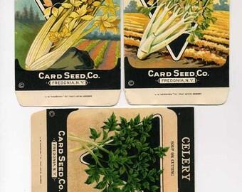 Group Of Three Vintage Seed Packets - Celery  Varieties - 1920's