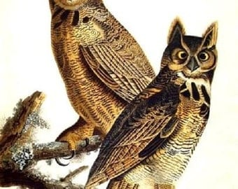 BIRD: OWLS Perched (Audubon Print) on One 16 inch square fabric panel to Quilt or Sew