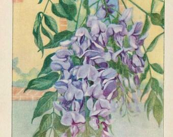 Vintage 1926 Garden Flowers Nature's Garden Original Bookplate Illustration, Print, Wisteria in Bloom,  Natural Habitat Scene