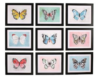 Field Study Butterfly Prints Bundle -  9x12//1canoe2//Hand Illustrated
