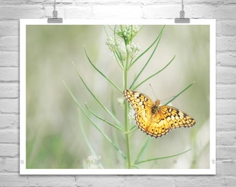 Golden Butterfly, Fine Art Print, Nature Photography, Soft Nature, Pale Green, Insect Art, Garden Art, Butterfly Picture, Canelo Hills