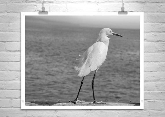 White Egret, Sea Bird Photography, Bird Art, White Bird, Black and White, Ocean Art, Bird Print, California Coast, Wildlife Photo